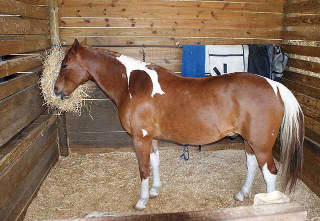 Anspr che der pferde an stall und weide tierfreund for Boden heuraufe pferd