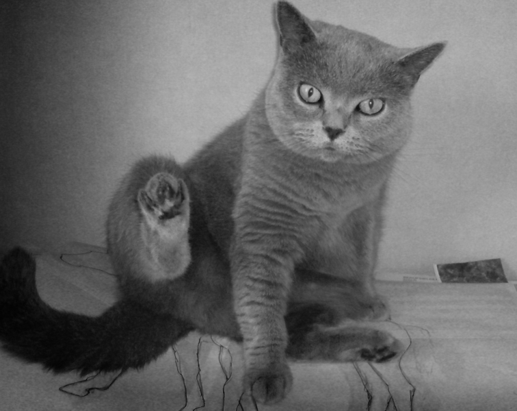 ... Möbelstücken.   Die Katze ...