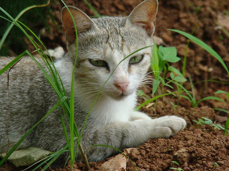 probleme mit der katze tierfreund