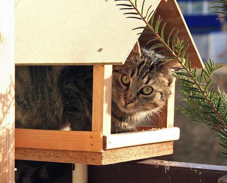 katzenverhalten wie jagen katzen tierfreund. Black Bedroom Furniture Sets. Home Design Ideas