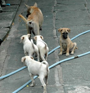 Straßenhunde in Bangkok
