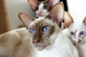 Viele Katzen schätzen Gesellschaft.