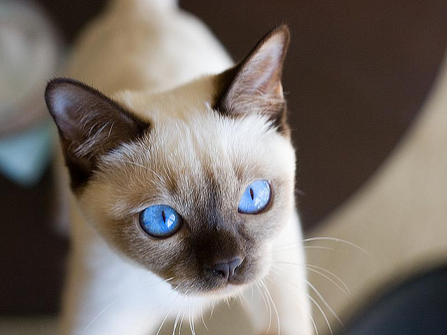 Cleaning Cats Eyes