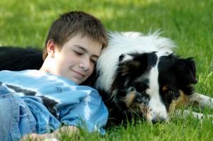 der perfekte Familienhund?