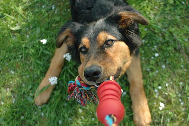Wohnung Mit Hund Finden