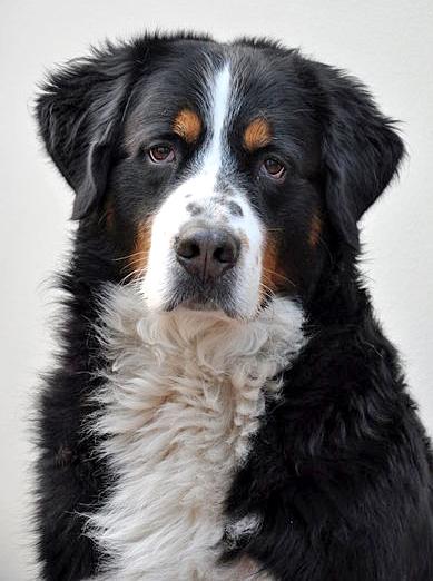 der perfekte familienhund die passende rasse