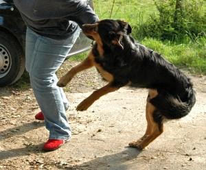 anspringen abgewöhnen ist vor allem bei großen hunden nötig