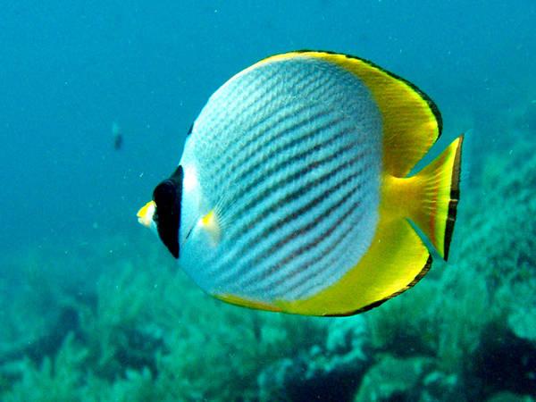 Die Große Vielfalt Der Barschartigen Im Korallenriff Tierfreund