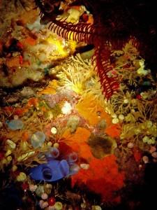 Korallenriff bei Nacht