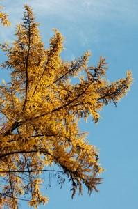 warum verlieren Bäume ihre Blätter?