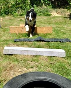 Spiele für Hunde - Abwechslung ist wichtig