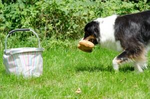 Spiele für Hunde: aufräumen