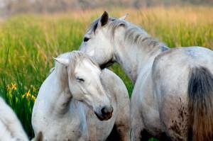 Welches Haustier passt zu mir - Pferde?