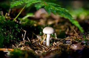 Ökosystem Wald - ein Stück Waldboden im Herbst
