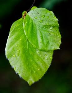 der Aufbau einer Pflanze: das Blatt