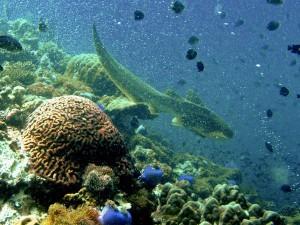 Haie am Korallenriff