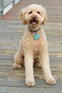 Spiele für Hunde fördern auch den Gehorsam