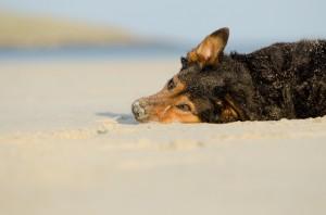 Hunde sind an fast allen Stränden willkommen