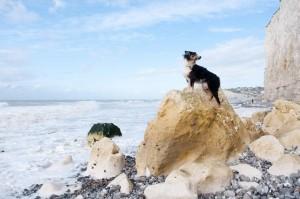 In Frankreich sind Hunde am Meer vielerorts kein Problem