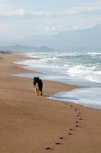 Peloponnes, in der Nebensaison kann auch Griechenland einen traumhaften Strandurlaub mit Hund bieten.