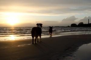 Die niederländische Küste bietet vergleichsweise viel Freiraum für Hunde