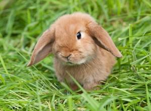 Kaninchen dürfen auch ohne Zustimmung des Vermieters gehalten werden