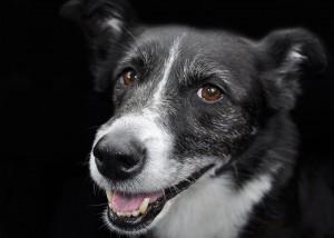 Ein Hund im Alter kann viel Pflege brauchen
