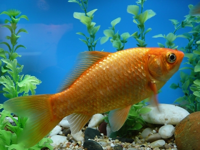 Anf ngertipps f r die aquarienanschaffung tierfreund for Aquarium fische arten