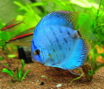 kaltwasser aquarium fische