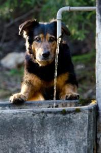 Auch Hunde brauchen auf Wanderungen ausreichend Wasser.