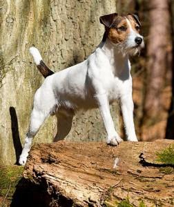 Im Urlaub ist ein Ausbüxen des Hundes besonders dramatisch.