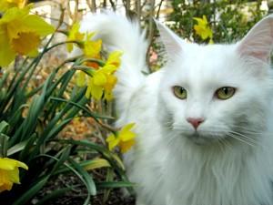 Einige Nassfutter sind speziell an Aktivität und Alter der Katze angepasst.
