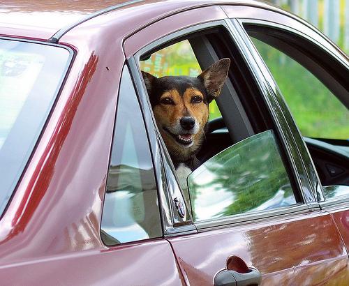 angst vor dem autofahren so wird die urlaubsreise mit dem hund entspannt tierfreund. Black Bedroom Furniture Sets. Home Design Ideas