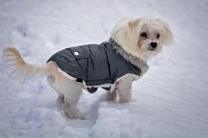 Einige Hunde fühlen sich im Winter mit Mantel deutlich wohler.