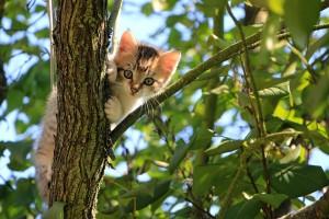 Katzen brauchen Abwechslung und Beschäftigung.