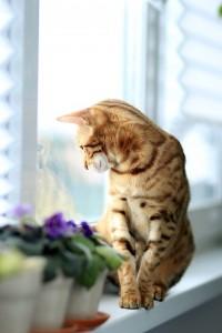 Viele Katzen ziehen Freigang reiner Wohnungshaltung vor.