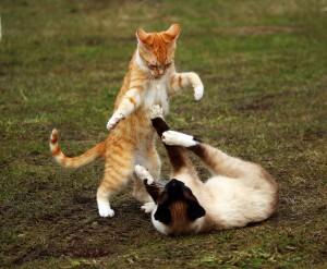 Junge Katzen sind sehr lebhaft und verspielt.