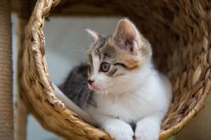 Katzen mögen hoch gelegene Ruheplätze.