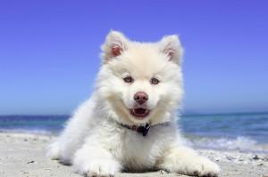 Hunde sind im Urlaub am liebsten mit dabei.