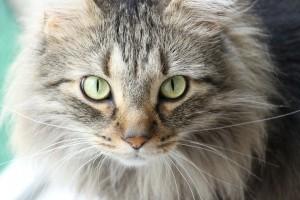 Katzen sind eigenständige Persönlichkeiten mit starkem Willen.