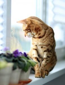 Katzen genießen Aussichtsplätze.