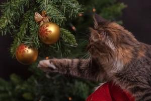 Womit sie spielen darf, muss eine Katze erst lernen.