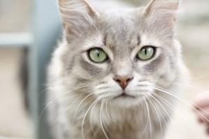 Wird die Katze krank, muss schnell gehandelt werden.