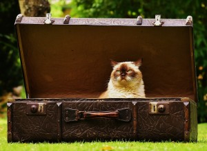 Katzen können ihre Menschen meist nicht in den Urlaub begleiten.