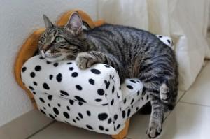 Wichtig ist, dass die Katze sich in der Pension wohl fühlt.