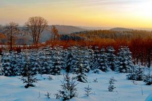 Mittelgebirge bieten Ruhe und Erholung.