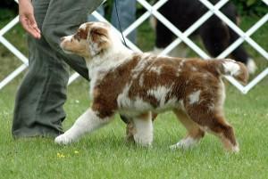 Hundeausstellungen auf Haustiermessen werden gerne genutzt, um seine Traumrasse besser kennen zu lernen.