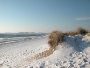 Sylt im Winter bietet viel Freiheit für den Hund.
