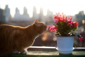 Einige beliebte Wohnungspflanzen sind für Katzen hochgiftig.