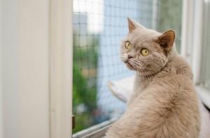 Ein Fensternetz kann Leben retten.